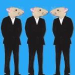 antidote-3-rats_12-283x300