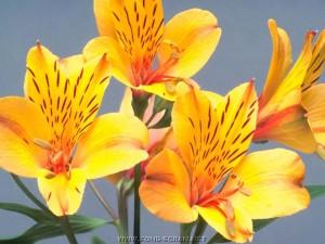 fleurs jaune