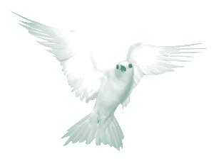 oiseau_3