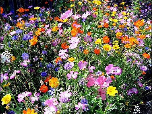 parterre_fleurs