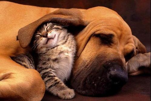 tendresse-chien-et-petit-chat
