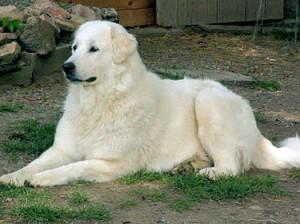 chien-89003