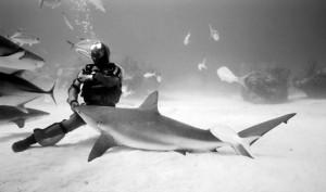 danse_avec_les_requins